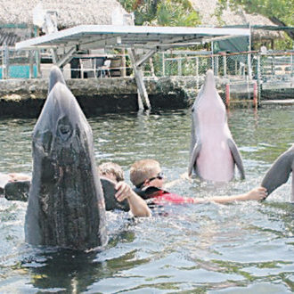 Deena Hoagland: Island Dolphin Care