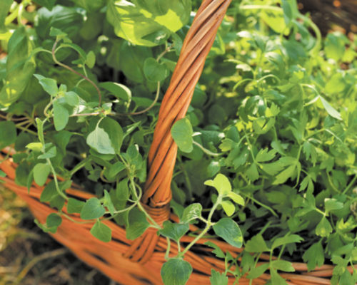 Planting a Container Herb Garden
