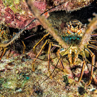 Lobster Checklist