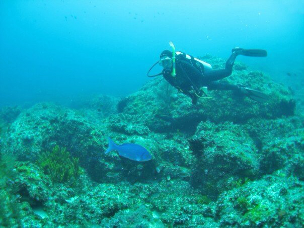 This photo was taken on Lord Howe Island, South Pacific whilst I was researching the Bluefish (Girella cyanea) that are now rare on the mainland Australian coast. My thesis included information on the habitat use, diet and conservation of the species by studying a population on the tiny World Heritage listed island. Melanie Lewis Sydney, Australia