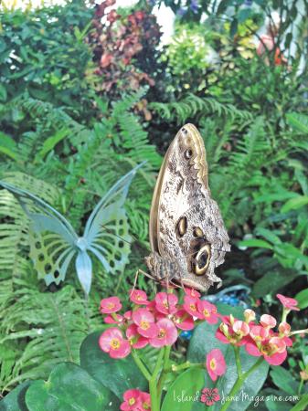 butterfly-eye
