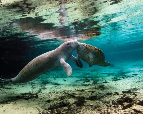 Florida Keys Artist Alicia Earle