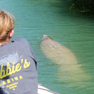 Manatees: No Longer Endangered?